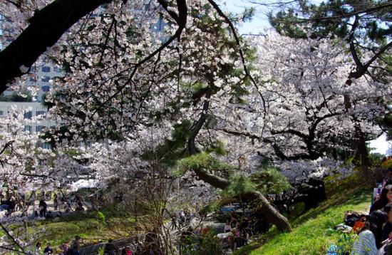 Sakura2012_001_2