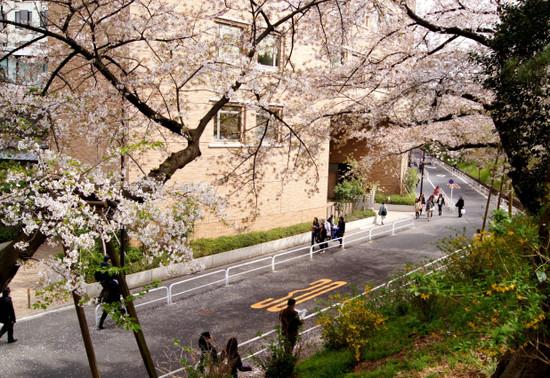 Sakura2012_002