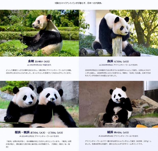 W_panda_family
