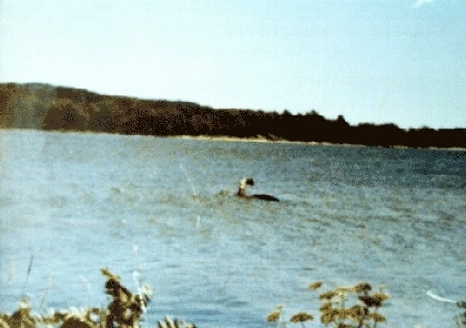 Lake-champlain-monster